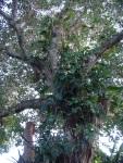 Welcome Tree