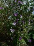 Flowering Tree