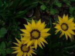 Flower Power, Mounts Botanical Garden