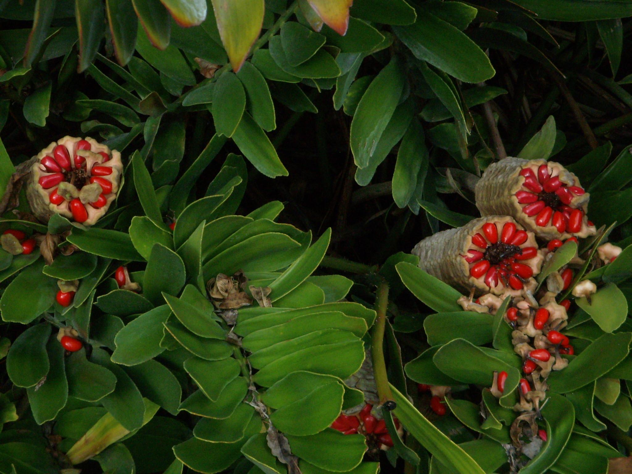 flowers | Serenity Spell