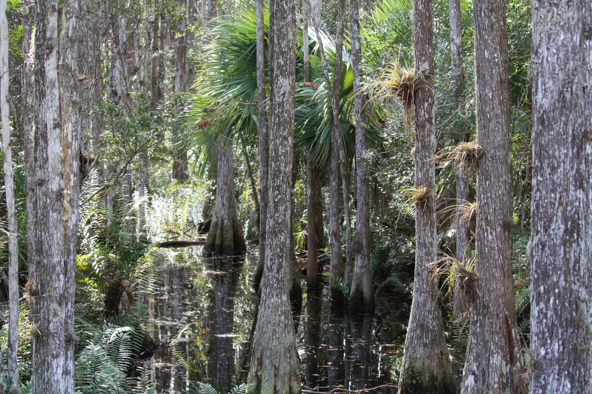 Where Is Jupiter Florida >> Cypress Creek Natural Area | Serenity Spell