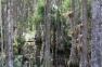 Cypress Swamp, Historic Jupiter-Indiantown Trail, Cypress Creek Natural Area