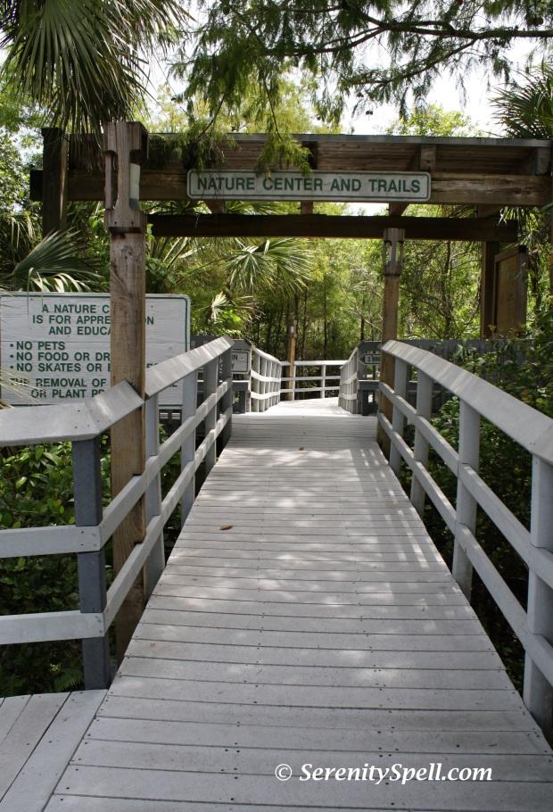 Fern Forest Nature Center Serenity Spell