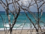 Beach through the Trees, John D. MacArthur Beach State Park, Palm Beach