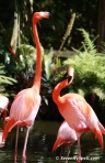 Namesake Flamingos at Flamingo Gardens in Davie, Florida