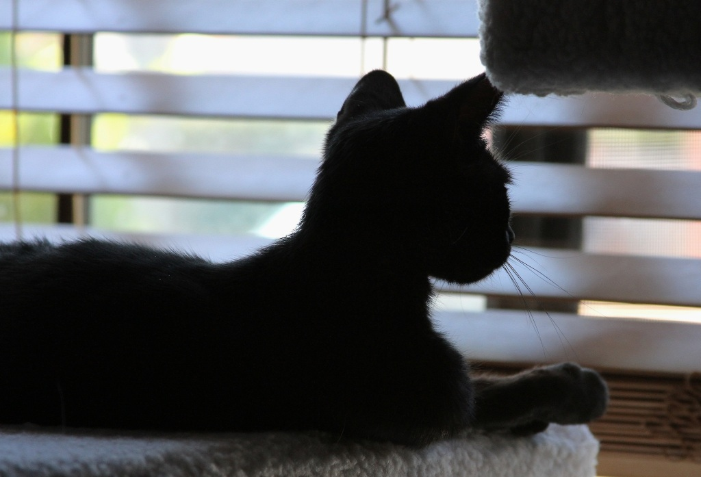 New Feline Rescue