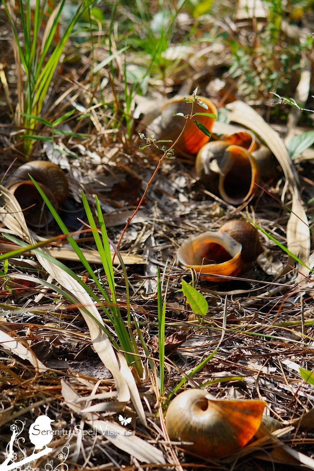 Apple Snails, Riverbend Park