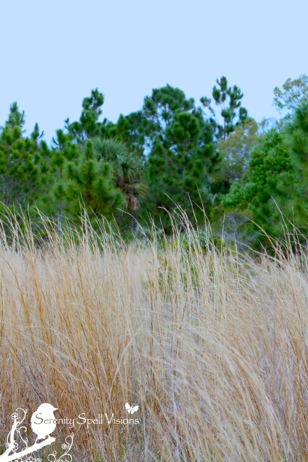 Prairie, Atlantic Ridge Preserve State Park
