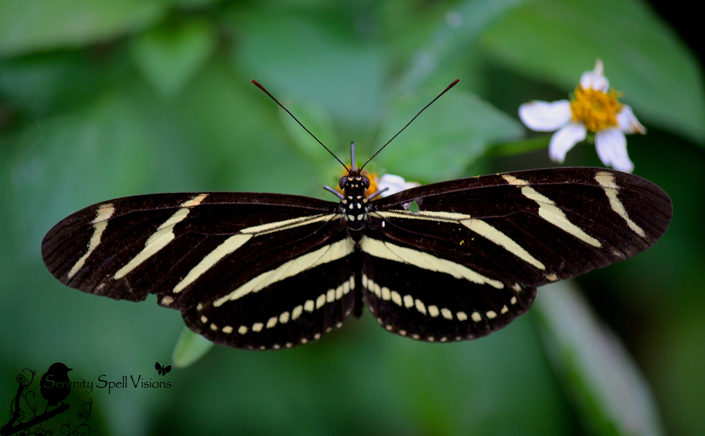 The Legacy Of Central Florida S Black Press: Most Beautiful Butterflies: Top 10 Fascinating And Unusual