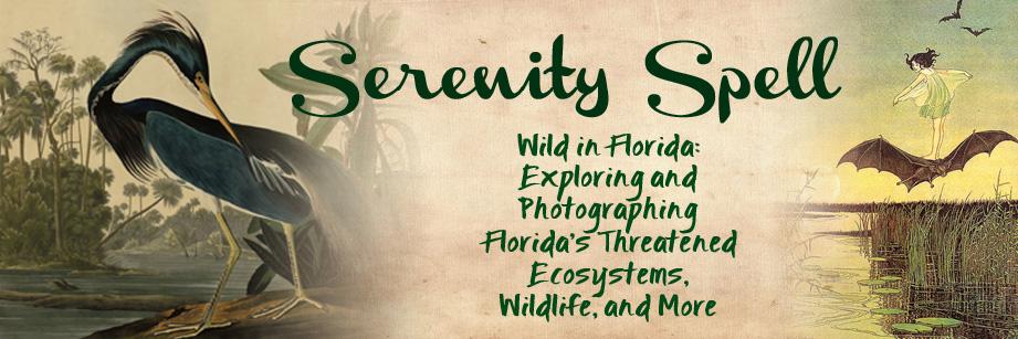 Serenity Spell