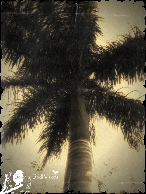 Retro Palm Tree, Florida