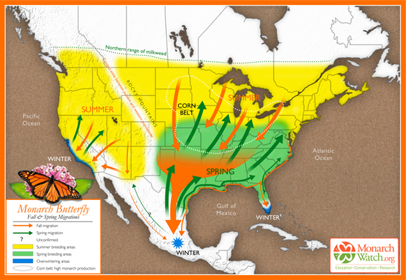Monarch Fall and Spring Migrations Map, Monarch Watch