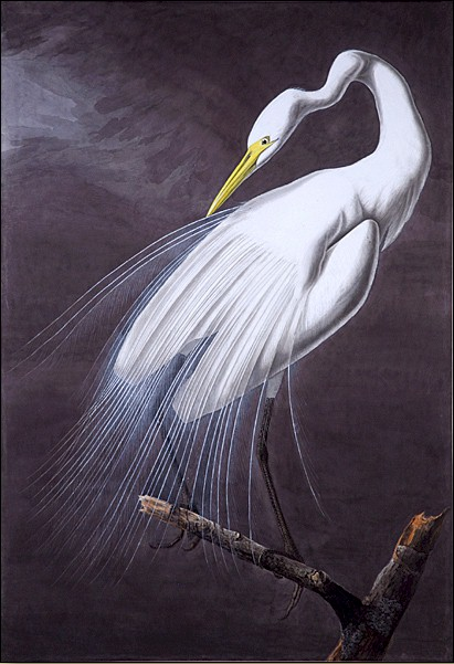 Audubon, Great Egret, 1821