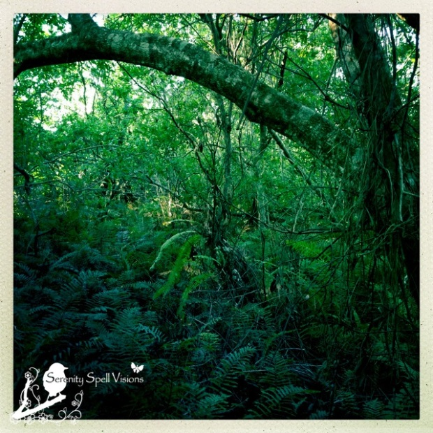 A New Trail, Seabranch Preserve State Park, Florida
