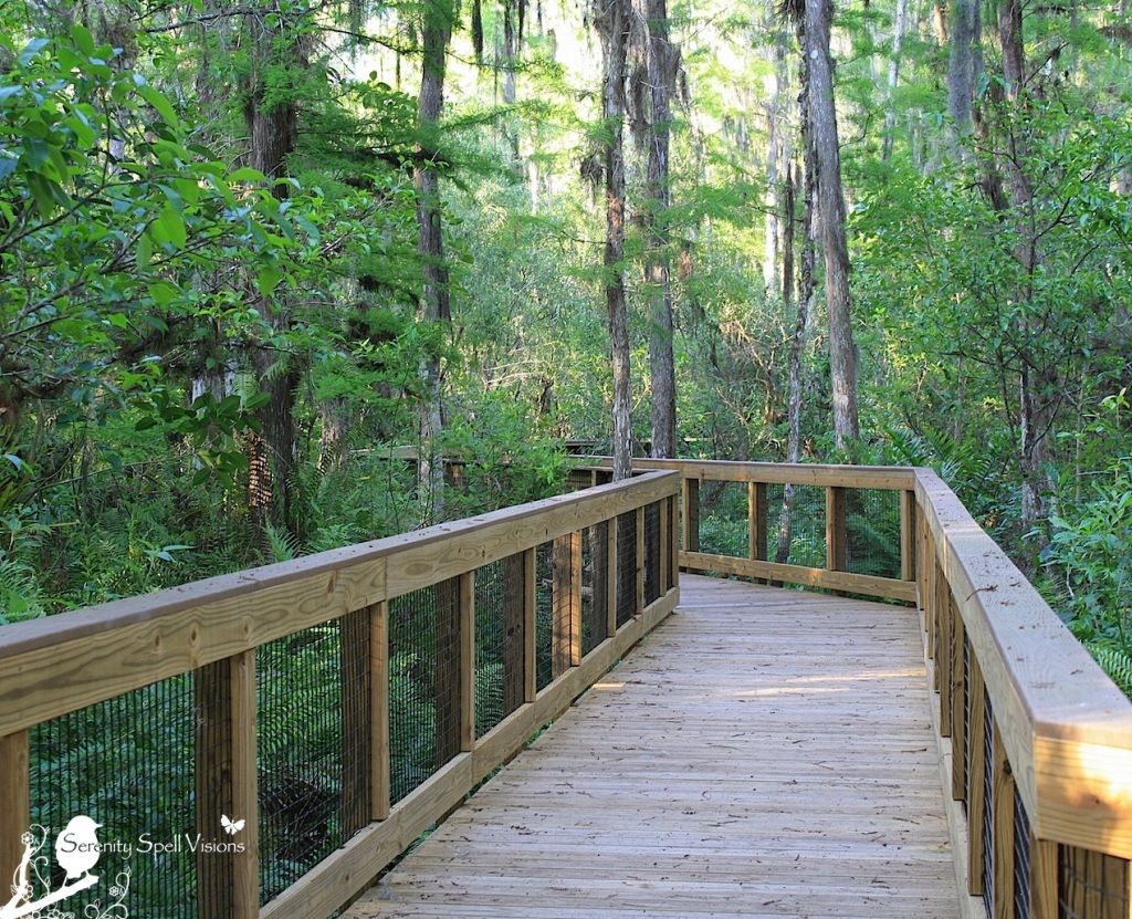 Boardwalk, Arthur R. Marshall Loxahatchee National Wildlife Refuge, Florida