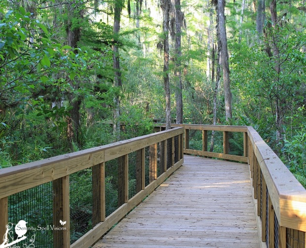 Boardwalk, Arthur R. Marshall Loxahatchee National Wildlife Refuge, Florida