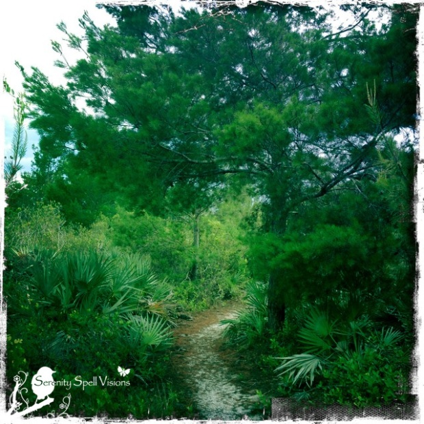 Trails of the Yamato Scrub Natural Area, Florida