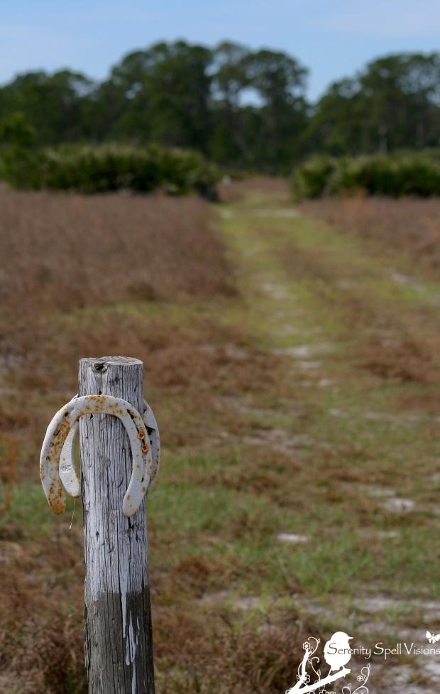 Equestrian Trail, Bluefield Natural Area, Florida