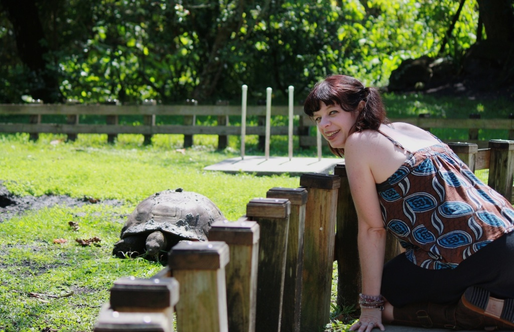 Visiting with an Ancient Tortoise at Flamingo Gardens, Florida