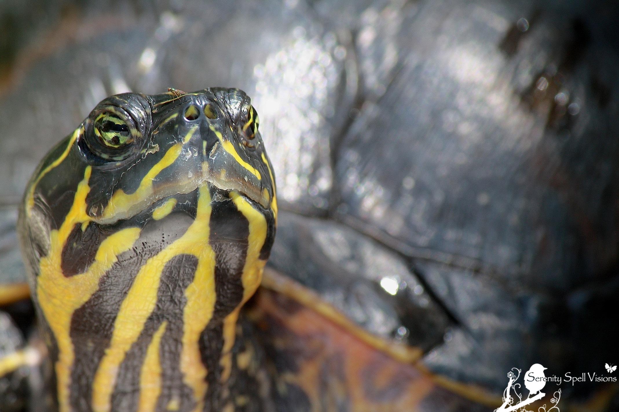 tortoises | Serenity Spell