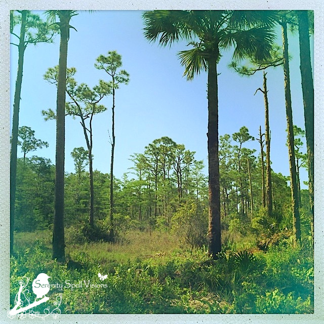 Flatwoods of Cypress Creek Natural Area, Jupiter, Florida