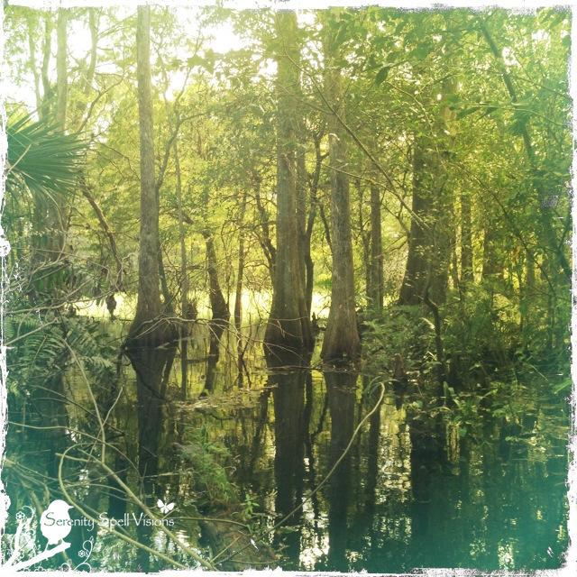 Arbor Oaks Florida: Florida Everglades / Natural Areas