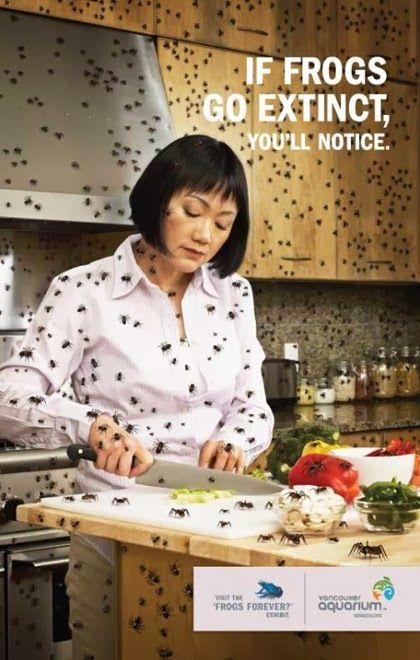 If Frogs Go Extinct....