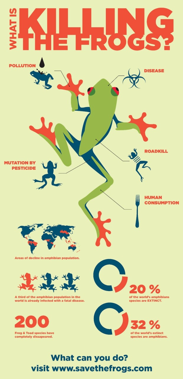 Frog Infographic