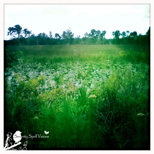 The lush Florida wetlands — a treasure to conserve