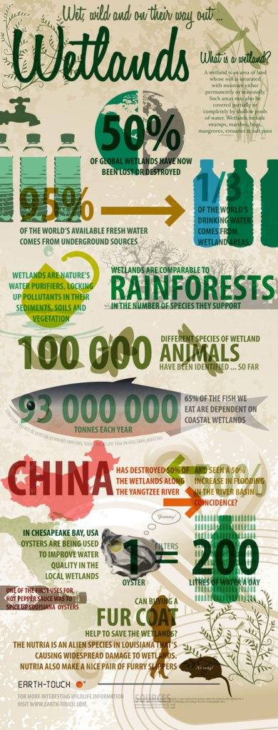 Wetlands Infographic