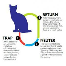 TNR Infographic
